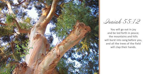 Isaiah 55:12 Tree